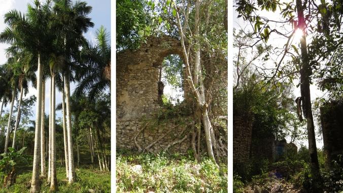 Eindrücke von der Wanderung in Sierra del Rosario