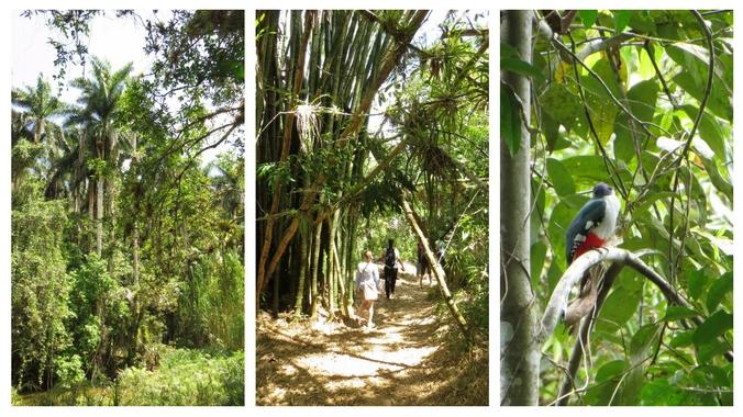 Topes de Collantes Nationalpark, ganz rechts: ein Tocororo - der kubanische Nationalvogel (da er blau-weiß-rot ist)