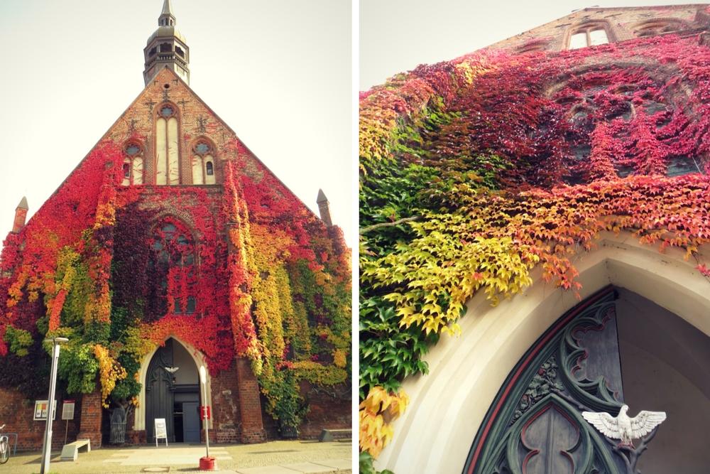 Stralsund Kirche Herbstlaub