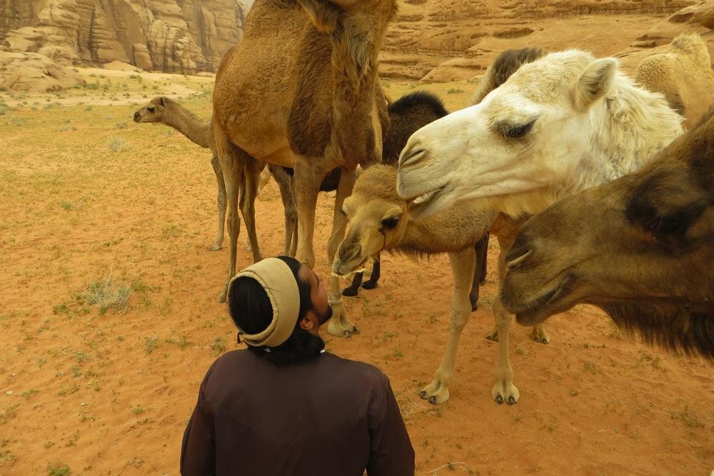 Baby Kamele füttern im Wadi Rum
