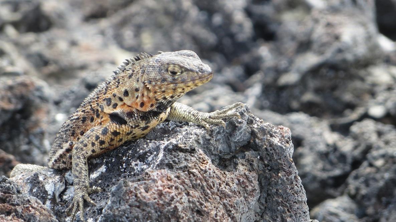 Galapagos Inseln Schönste Orte Südamerika