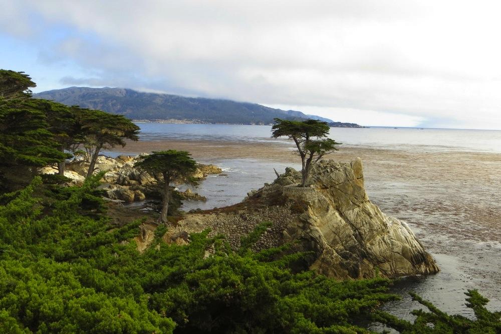 Kalifornien Rundreise Highway 1 Sehenswürdigkeit Einsame Zypresse