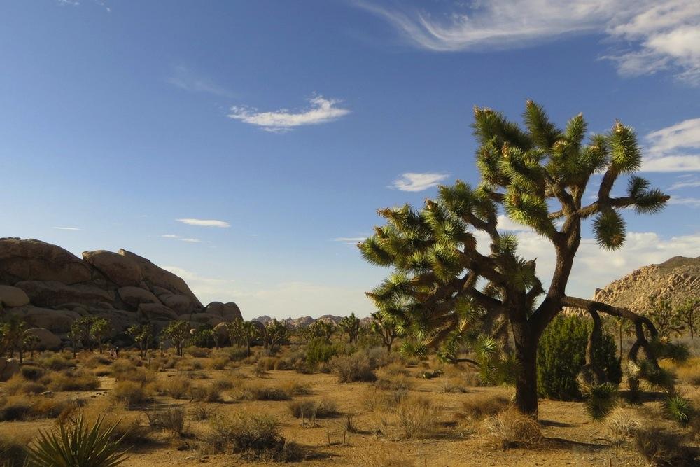 Kalifornien Urlaub Joshua Tree Park