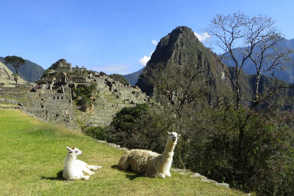 Machu Picchu Peru mit Lama