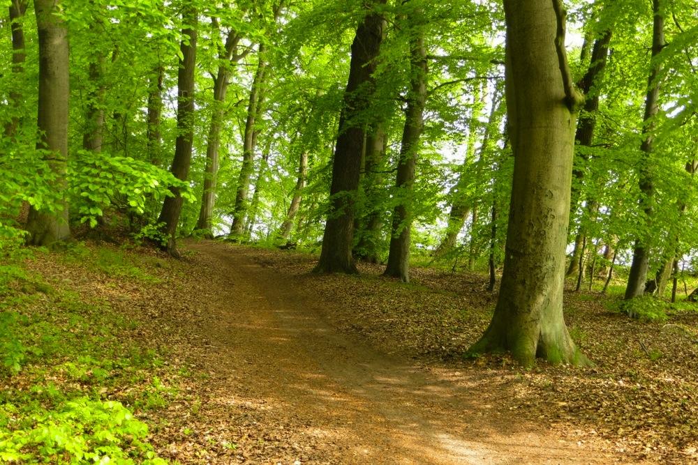 Waldweg auf der Radtour um den Schweriner See