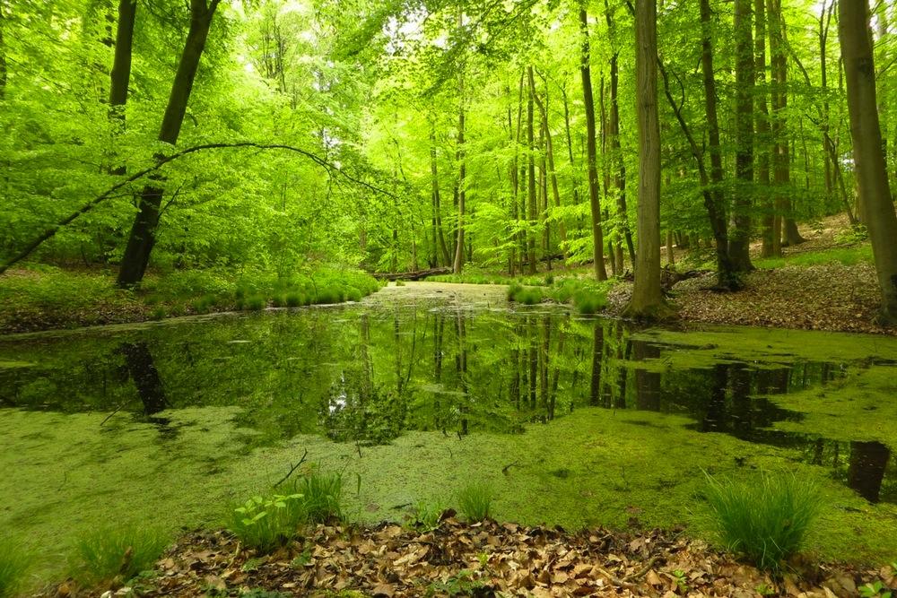 Waldstück rund um Schwerin