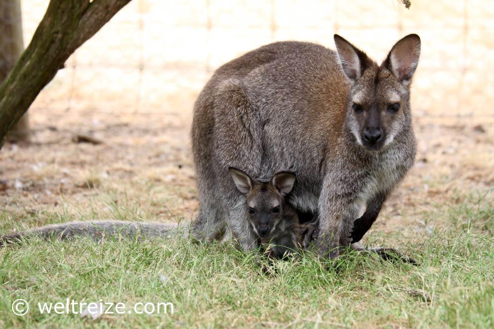 Kangaroo Island weltreize