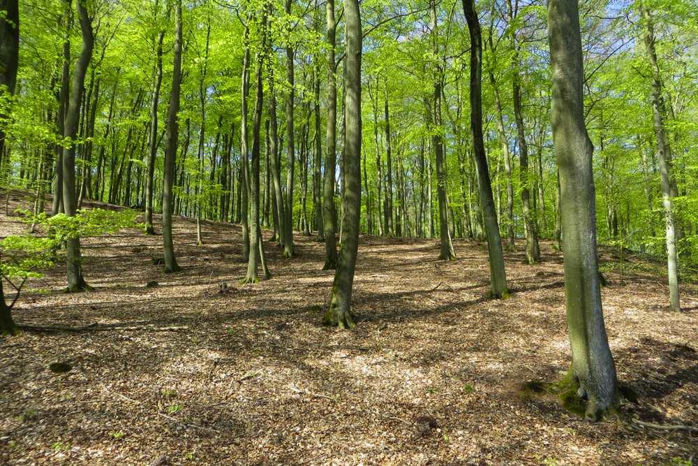 Wolgastsee Spaziergang Usedom Aktivitäten Heringsdorf