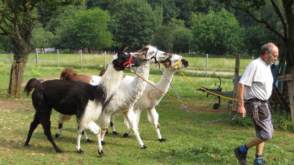 Reckenberg Lamas Ausflugsziele Franken